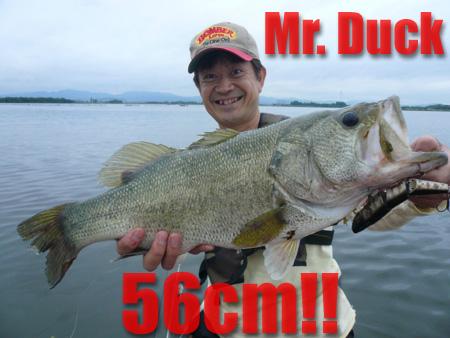 56cm-B.jpg